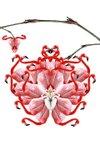 Cassandra_orchidfull_2